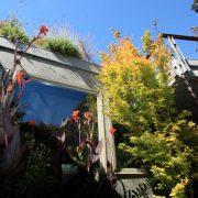 Roof garden plants tumble over building edge