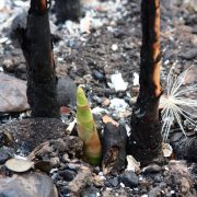 new growth from ashes