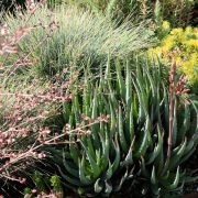 Succulents and other drought tolerant plants cohabitate