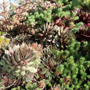 Succulents play major role